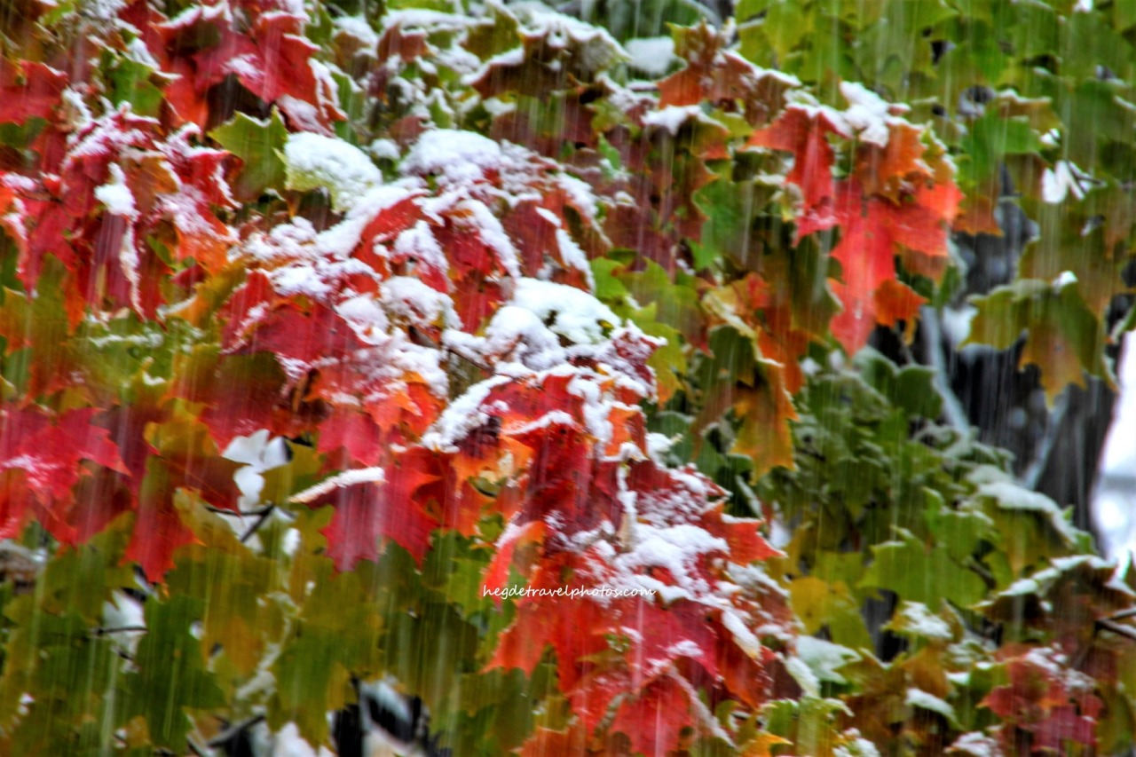 Falling Snow on Autumn Leaves