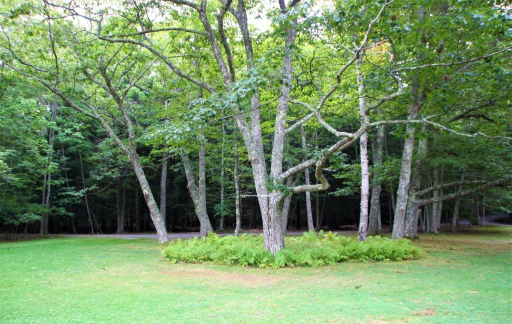 Wild Gardens of Acadia, Acadia National Park, Maine