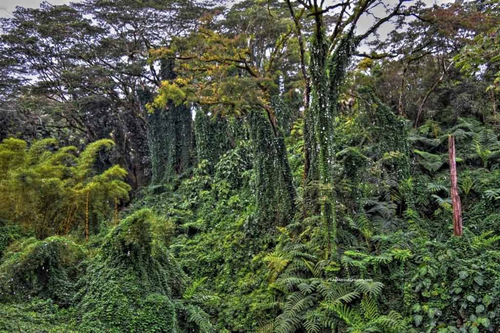 'Akaka Falls State Park, Big Island, Hawaii